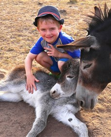 Destiny Boonah ECO Cottages and Donkey Farm - Australia Accommodation