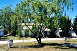 Blue Topaz Caravan Park  Camping Ground - Australia Accommodation