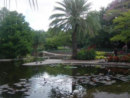Brisbane City Botanic Gardens - Australia Accommodation
