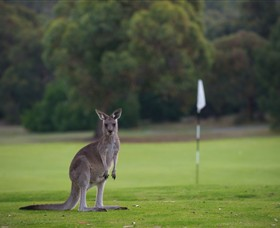 Anglesea Golf Club - Australia Accommodation