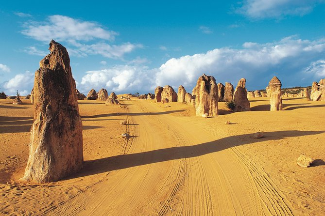 Pinnacles Desert Koalas and Sandboarding 4WD Day Tour from Perth - Australia Accommodation