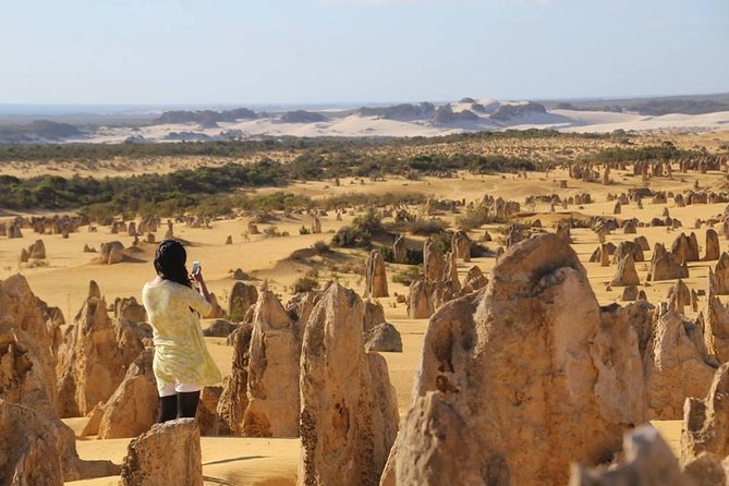 Full-Day Pinnacles Sandboarding and Yanchep National Park from Perth - Australia Accommodation