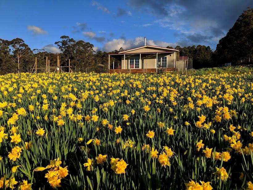 Mountain Blue Guest House - Australia Accommodation