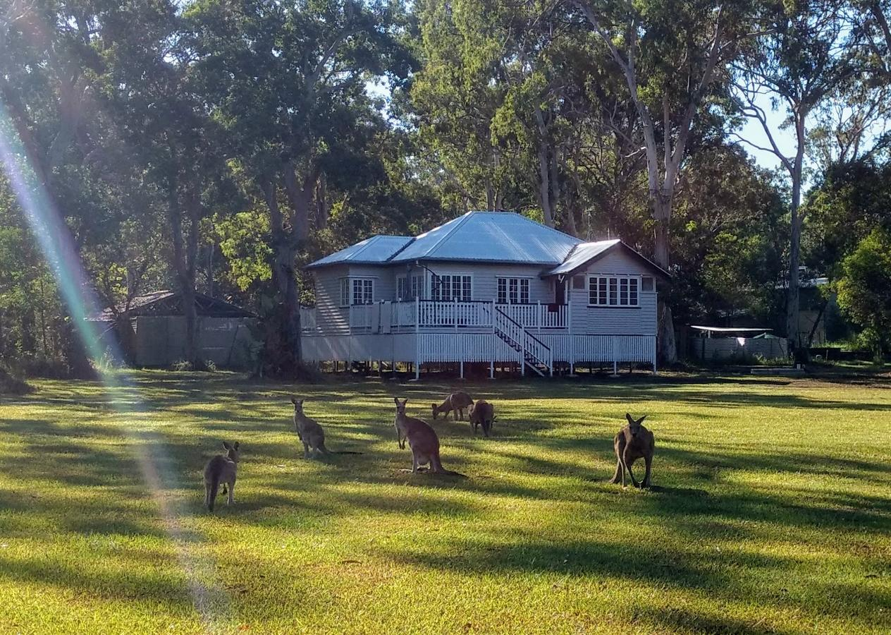 Lake Weyba Noosa Lodge  Kangaroos - Australia Accommodation