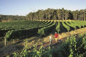 Margaret River Caves Wine and Cape Leeuwin Lighthouse Tour from Perth - Australia Accommodation