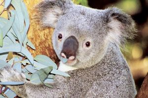 Perth Zoo General Entry Ticket and Sightseeing Cruise - Australia Accommodation