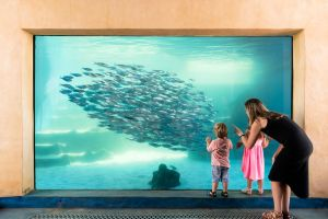 AQWA the Aquarium of Western Australia - Australia Accommodation